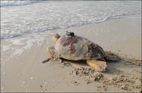 EWS-WWF concludes Marine Turtle Conservation Project with world-class findings